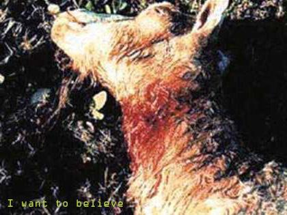 Овца, убитая под Оренбургом