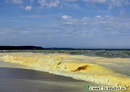 Прибрежные воды Балтийского моря окрасились в ярко-желтый цвет