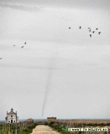 Торнадо из саранчи накрыло португальскую деревню